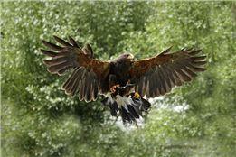 Wilde Kreaturen - Vogel und Wildlifefotografie im Wildpark Gangelt