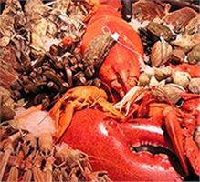 Fisch und Meeresfrüchte Kochkurs Sachsen Montag - Donnerstag