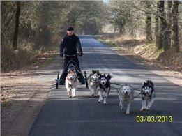 Husky-Tour mit Zugwagen