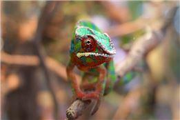 Reptilien und Makrofotografie im TerraZoo Rheinberg